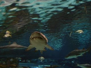 Explore The Flora And Fauna In Oceans